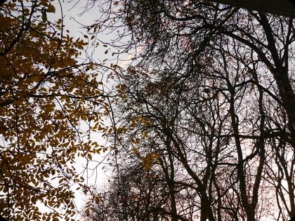 ドイツ  冬時間 朝