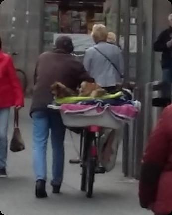 ドイツ 犬