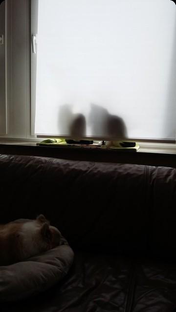ドイツ 猫 犬 窓 日向