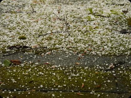 ドイツ テラス 苔 雹