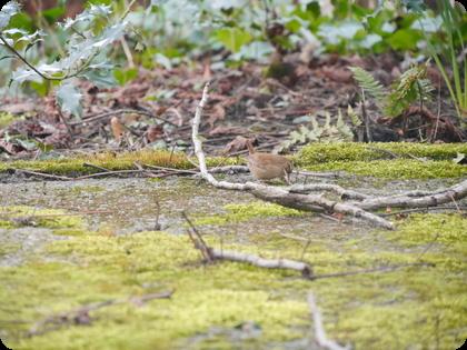 ドイツ テラス 苔 鳥