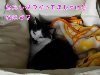 1月 うたこのベッド~♪