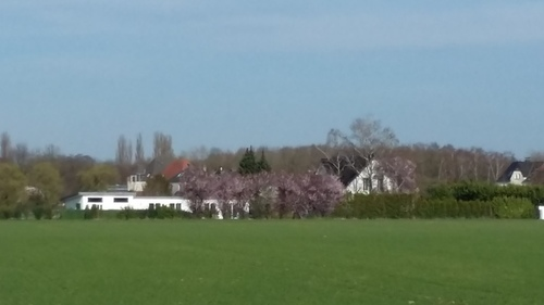 3月 ドイツ 春 桜