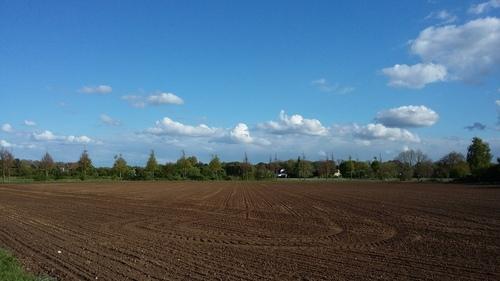 4月 ドイツ いちご畑