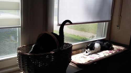 5月 ドイツ 猫 日向ぼっこ