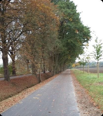 ドイツ 道 並木道