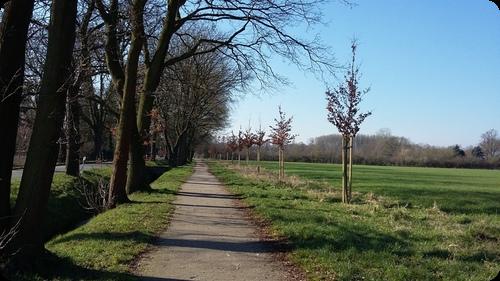 ドイツ 道 並木道 草原