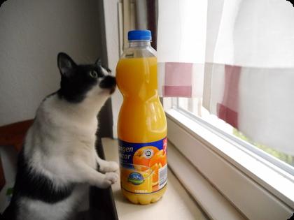 ドイツ 猫 オレンジジュース