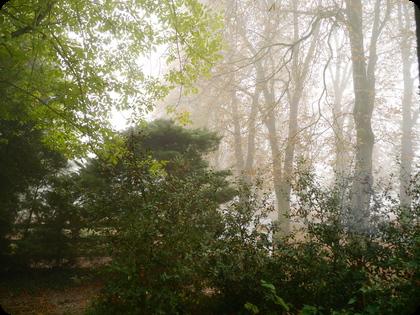 ドイツ 霧
