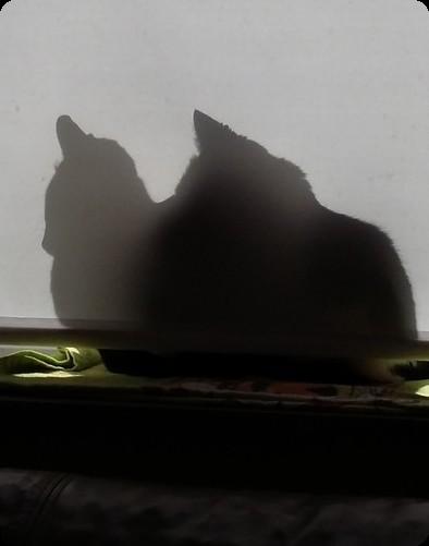 ドイツ 猫 日向 窓