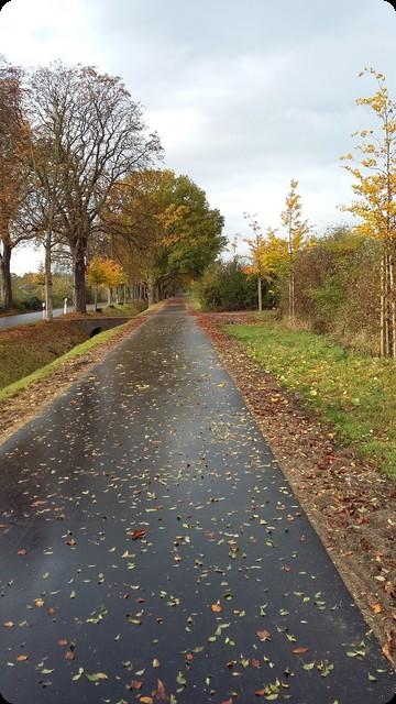 ドイツ 並木道 雨