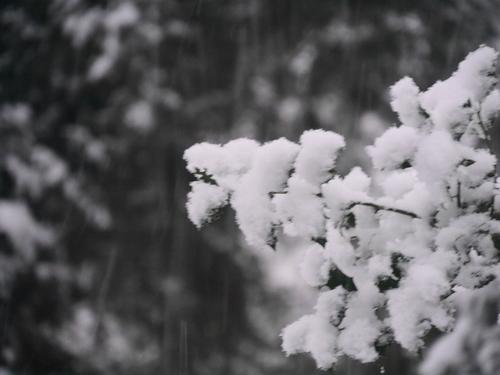 2月11日 雪の朝~♪