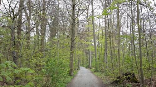 4月 ドイツ 森 サイクリング