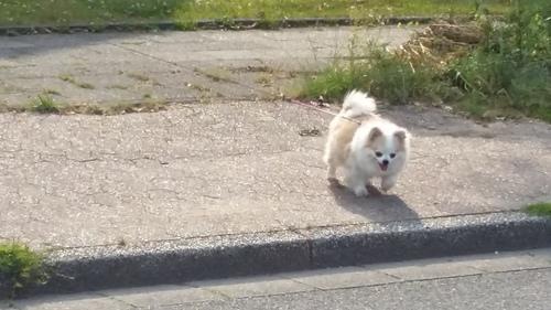 6月 ドイツ 犬 バリカン