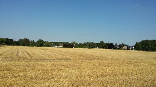 2017.7 ドイツ 景色 麦畑