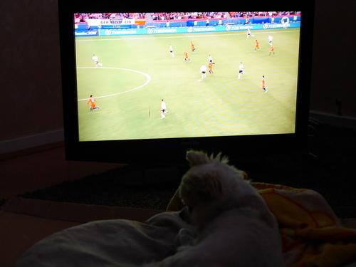 2017.7 ドイツ 犬 テレビ