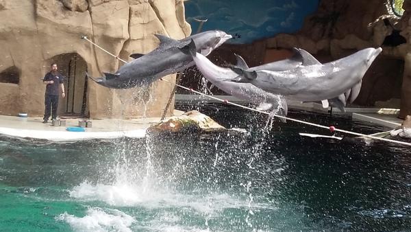【ちょこっとドイツ語】ドイツの動物園のイルカショー(動画)。